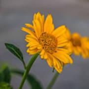 Golden Flower II Poster