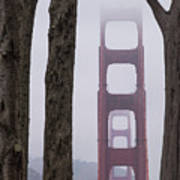 Golden Gate Through The Trees Poster