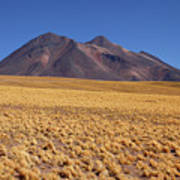Golden Grasslands And Miniques Volcano Chile Poster