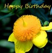 Golden Guinea Happy Birthday Poster