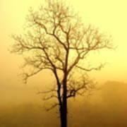 Golden Haze Poster