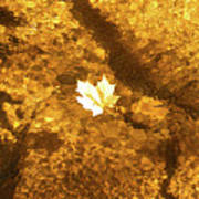 Golden Leaf In Water Poster
