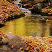 Golden Reflections In A Stream On The Blanchet Trail Gatineau Pa Poster