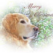 Golden Retriever Dog Merry Christmas Card Poster