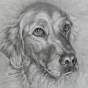 Golden Retriever Drawing Poster