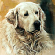Golden Retriever Poster