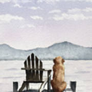 Golden Retriever On The Dock Poster
