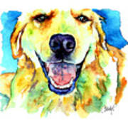 Golden Retriever Portrait Poster