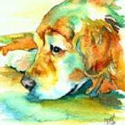 Golden Retriever Profile Poster