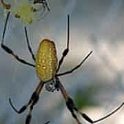 Golden Silk Spider 2 Poster