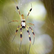 Golden Silk Spider Poster