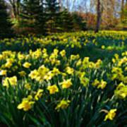 Golden Spring Carpet Poster