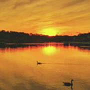 Golden Sunset  Poster