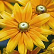 Golden Sunshine Poster
