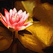 Golden Swamp Flower Poster