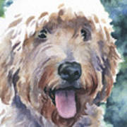 Goldendoodle Poster