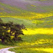 Goldenrod Oak Santa Ynez California 2 Poster