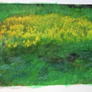 Goldenrods In Field Poster