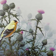 Goldfinch And Thistles Poster