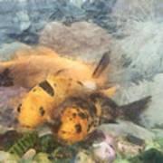 Goldfish In An Aquarium Poster