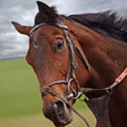 Good Morning - Racehorse On The Gallops Poster