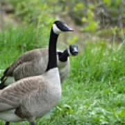 Goose Warning Poster