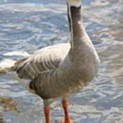 Goosey Goosey Gander... Poster