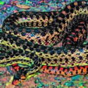 Gopher Snake Poster