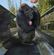 Gorilla With Lollipop Poster
