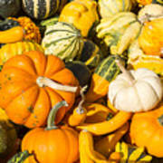 Gourds Pile 1 A Poster