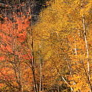 Grafton Notch Foliage Poster
