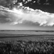 Grain Field Poster