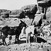 Grand Canyon: Donkeys Poster
