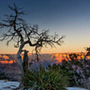 Grand Canyon Lone Tree At Sunset Poster