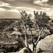 Grand Canyon Lone Tree Poster