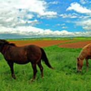 Grand-pre Horses Poster