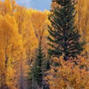 Grand Teton Fall Poster