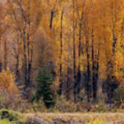 Grand Tetons Fall Poster
