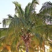 Grand Turk Palms On The Beach Poster