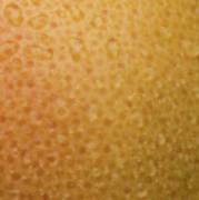 Grapefruit Skin Poster