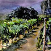 Grapes Of Niagara Poster