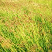 Grass Field Landscape Illuminated By Sunset Poster