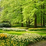 Grass Lawn With Daffodils  Poster