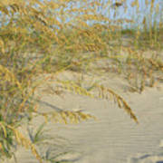 Grass On The Beach Sand Poster