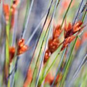 Grass Seeds Poster