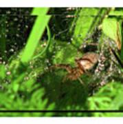 Grass Spider Poster