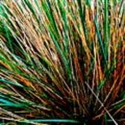 Grass Tussock Poster