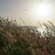 Grass Wave Poster