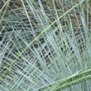 Grasses 1 Poster