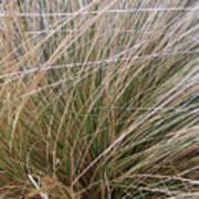Grasses 5 Poster